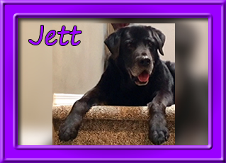 RainbowBridge Jett